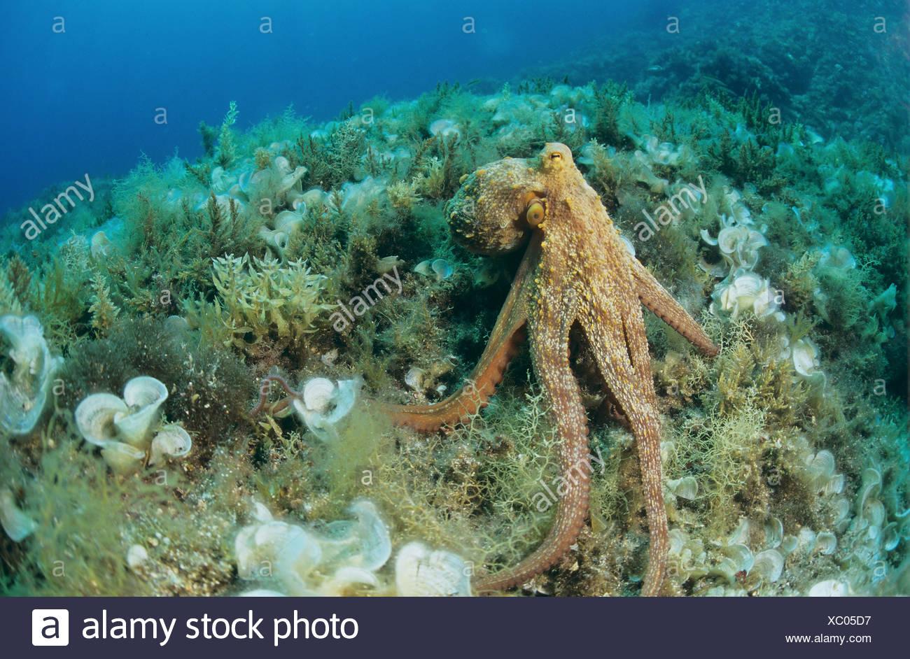 Erfreut Oktopus Farbung Seite Fotos - Framing Malvorlagen ...