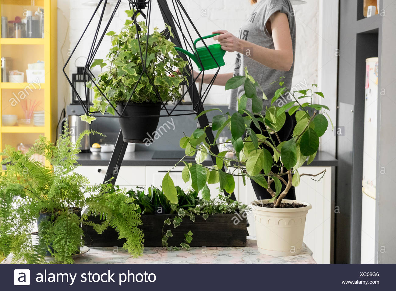 Mittelteil Der Frau Bewasserung Hangende Efeu Pflanze In Kuche Stockfotografie Alamy