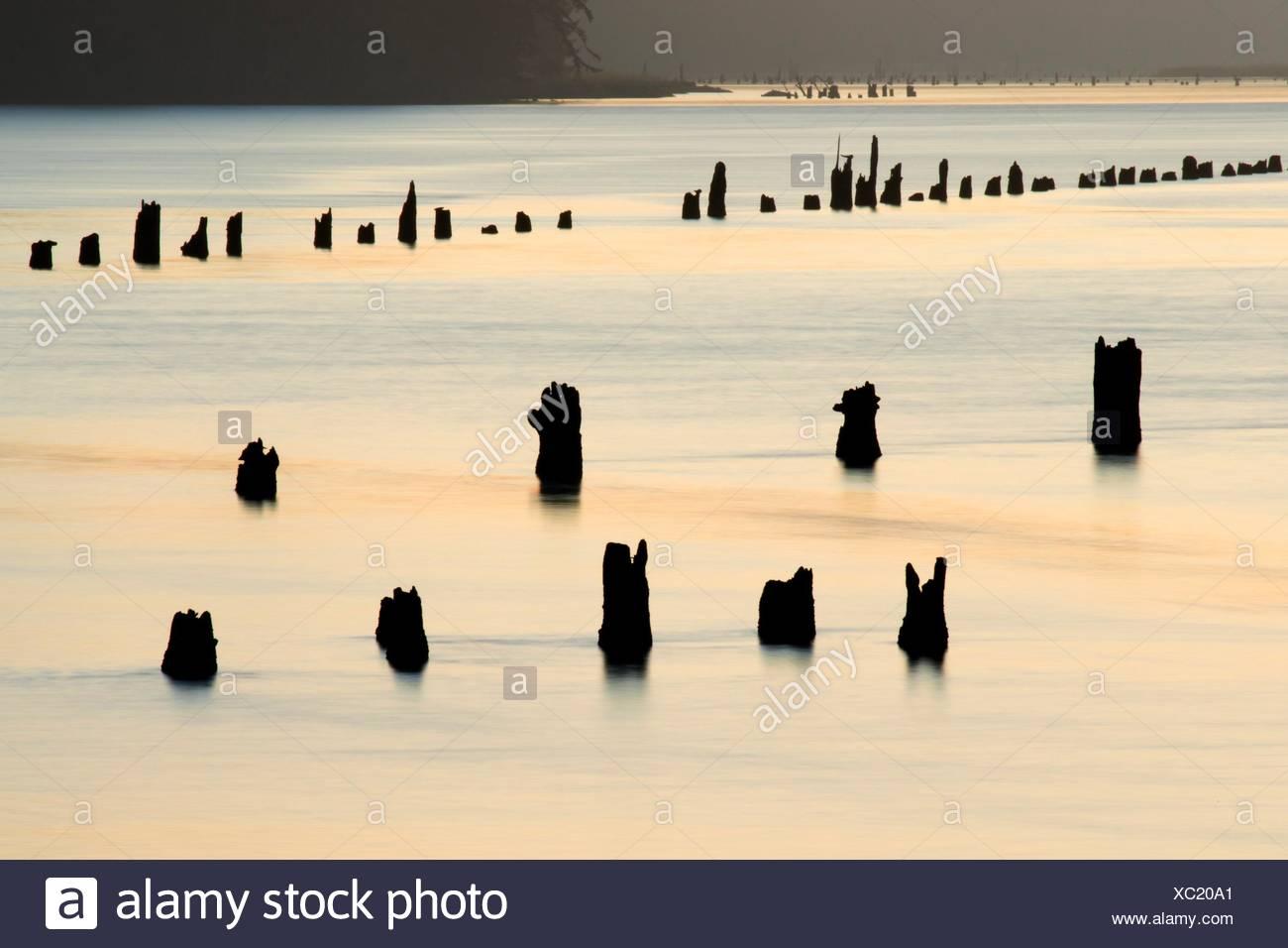 Pfähle in Siuslaw Bay, Florence, Oregon. Stockbild