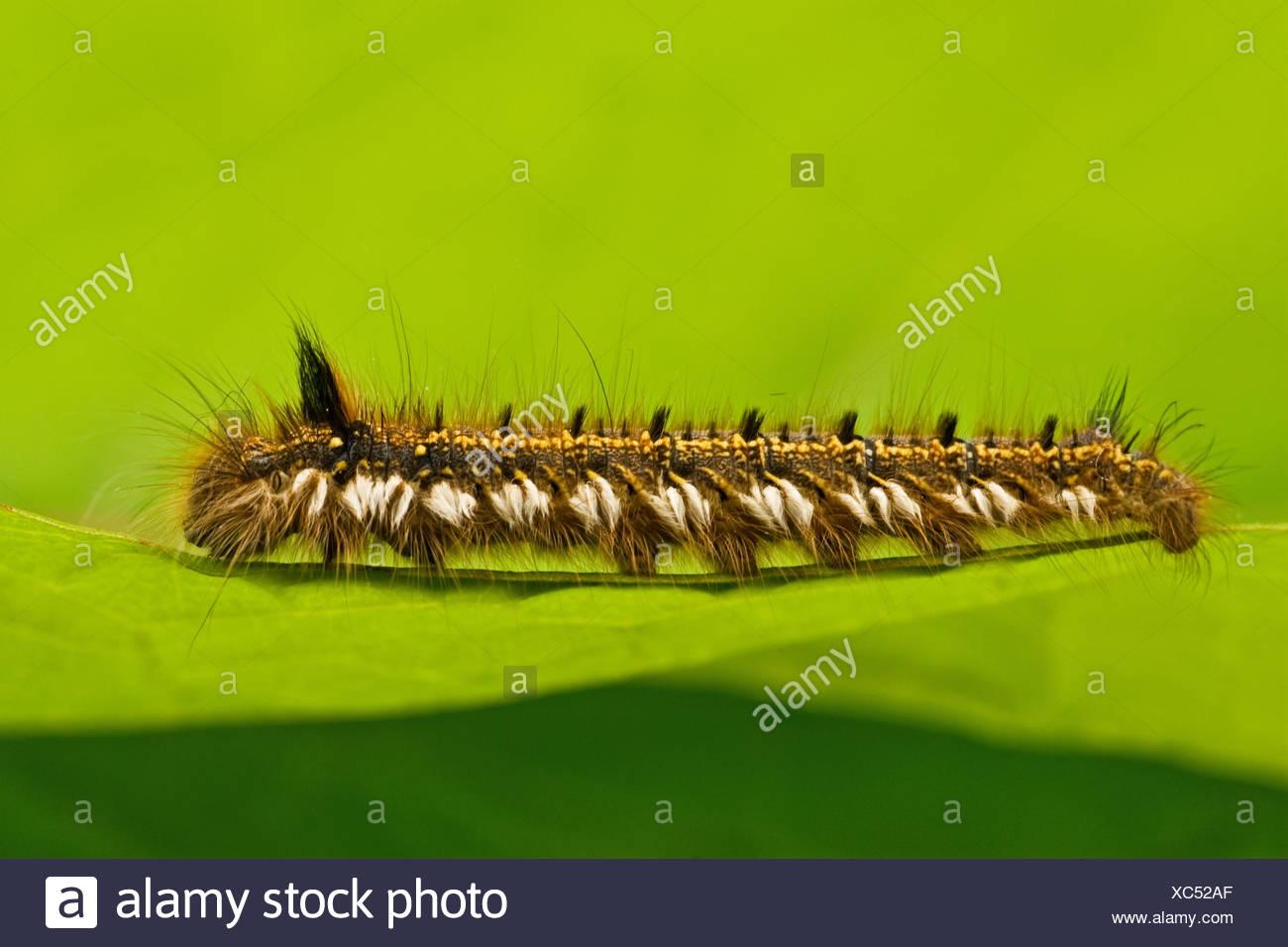 Beste Insekten Färbung Seite Bilder - Framing Malvorlagen ...