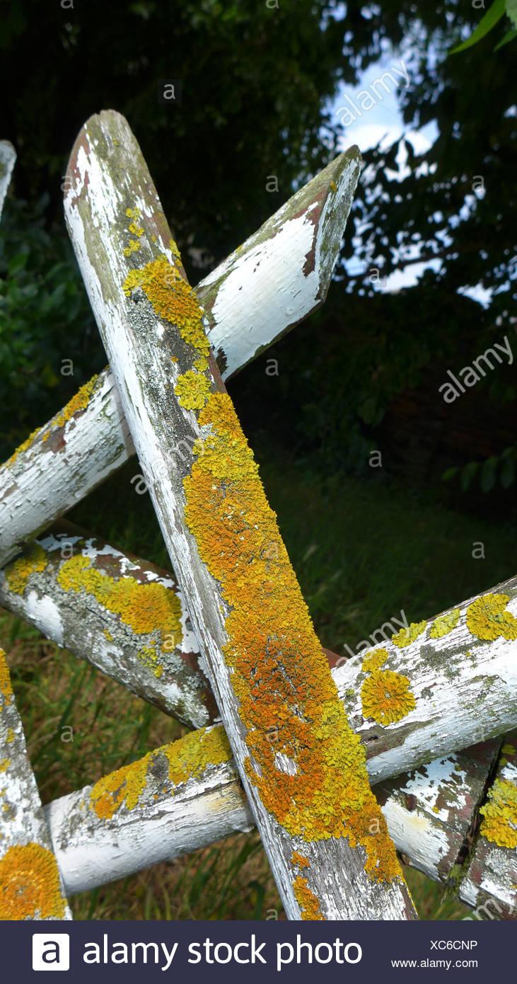 Alten Rustikalen Zaun Bedeckt Mit Flechten Deutschland Stockfoto