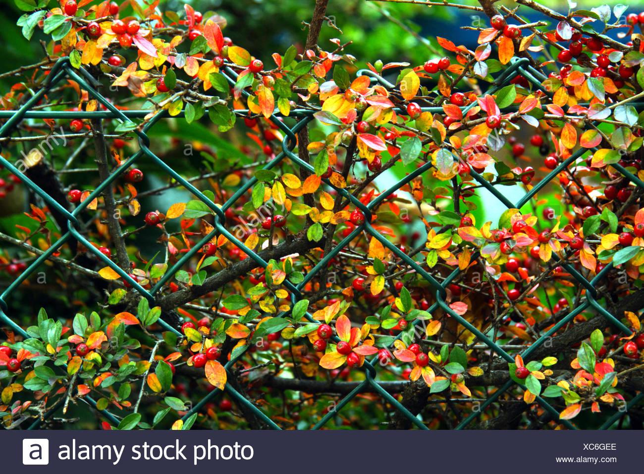 Red Mesh Fence Stockfotos & Red Mesh Fence Bilder - Alamy