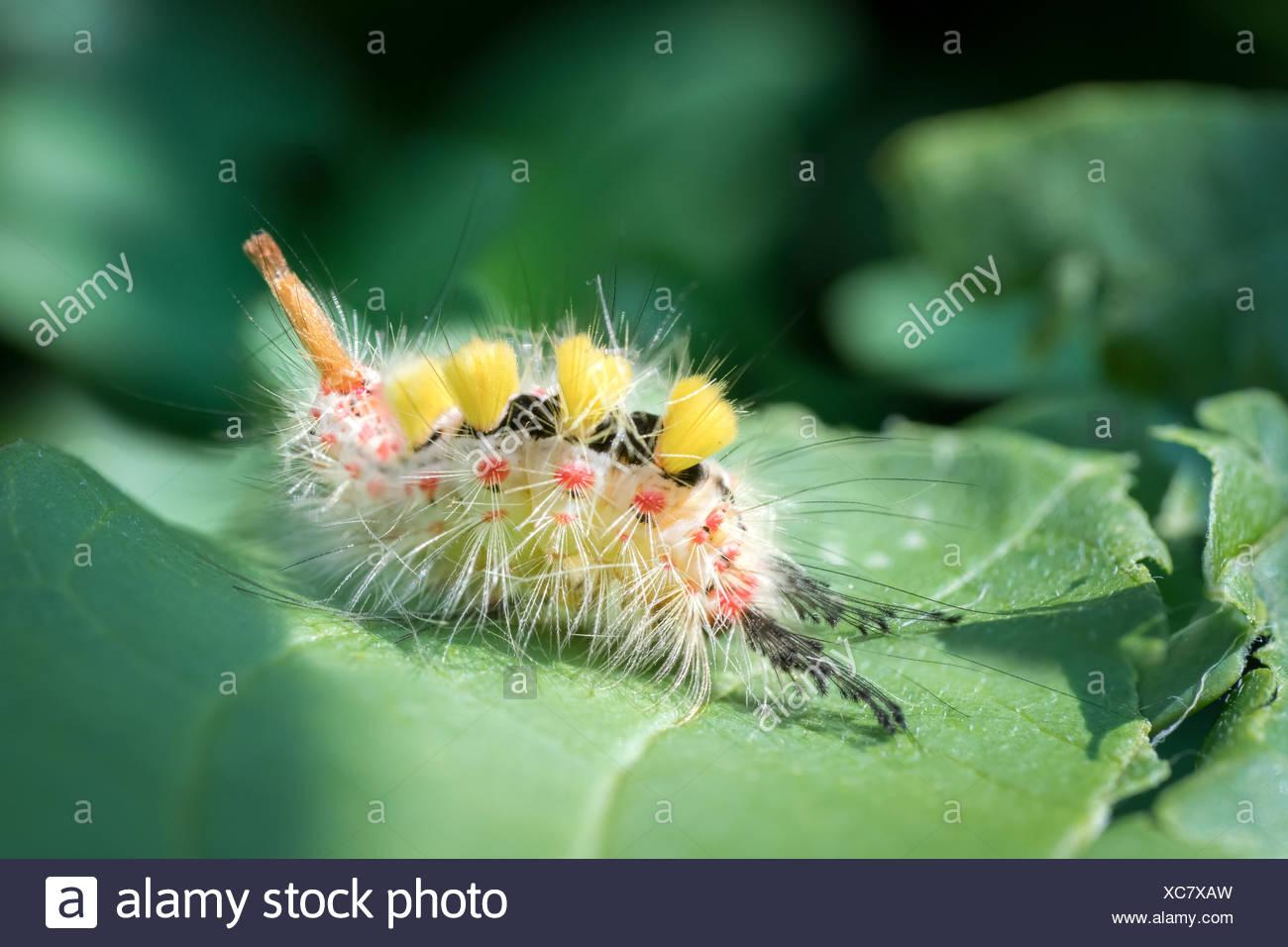 Fein Monarchfalter Lebenszyklus Färbung Seite Fotos - Beispiel ...
