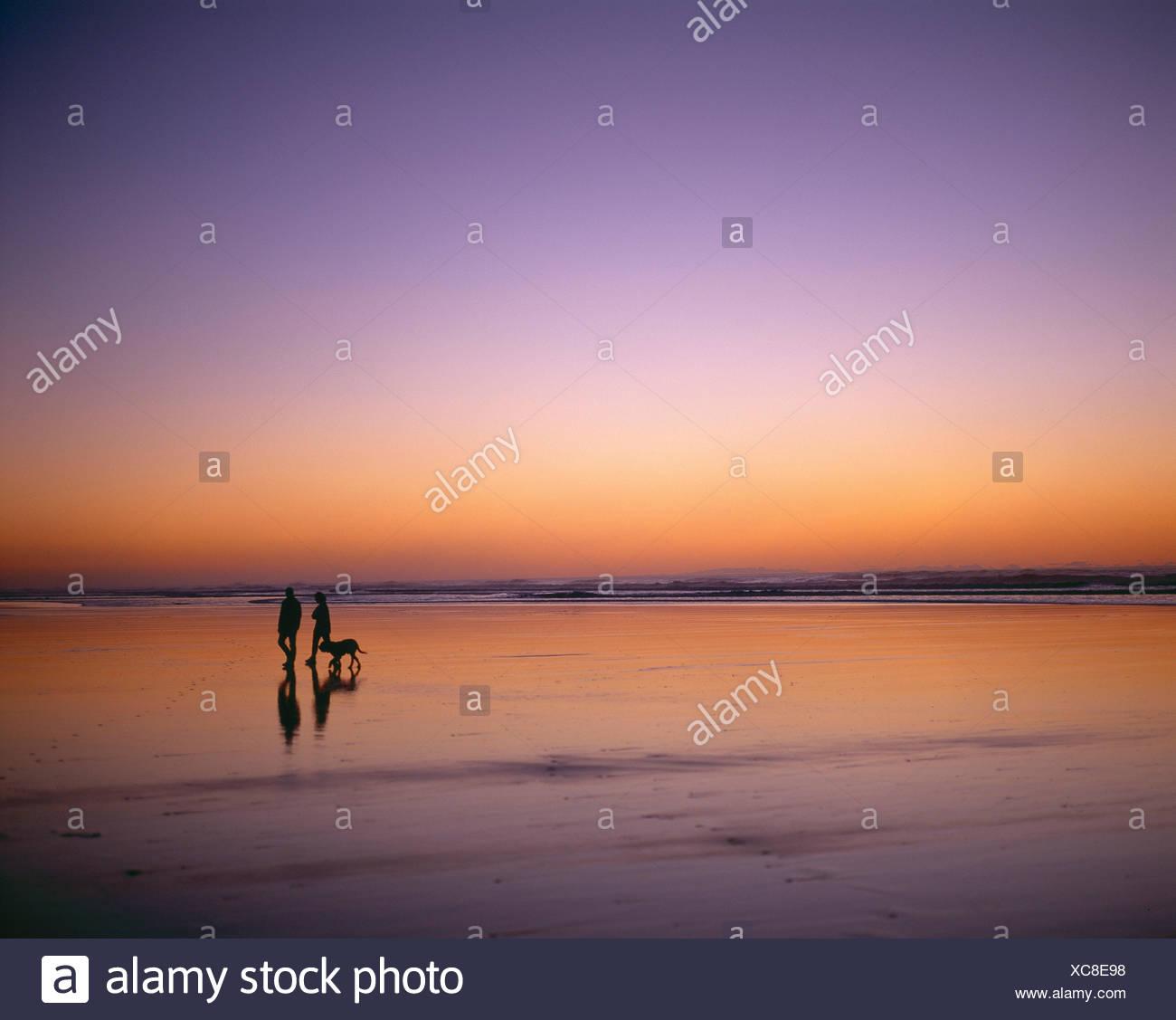 Neuseeland. North Island. Region Auckland. Paar Spaziergang mit dem Hund zusammen Piha Beach in der Abenddämmerung. Stockbild