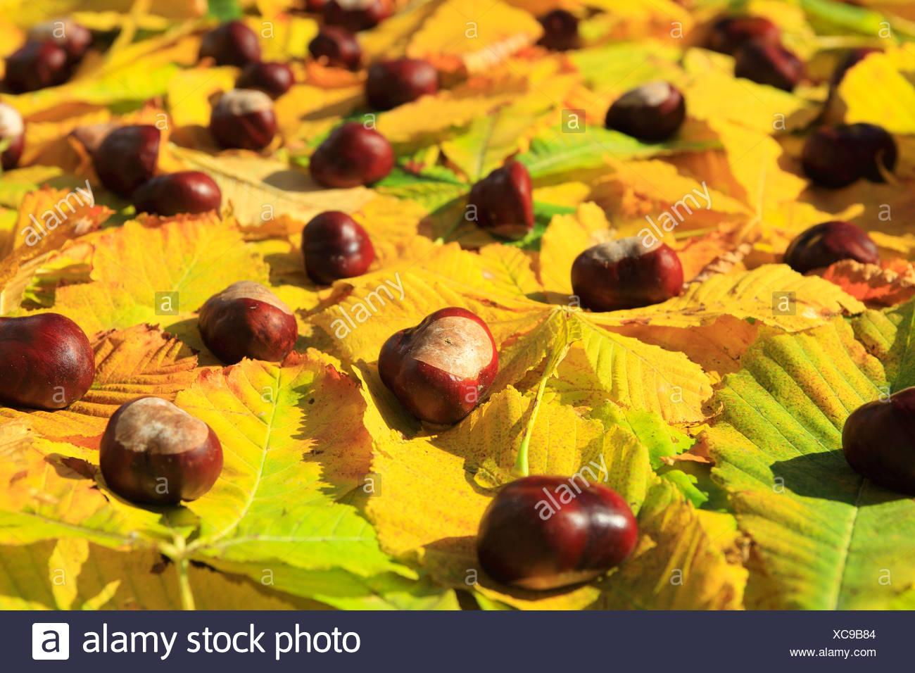 Nett Früchte Die Blätter Färben Bilder - Malvorlagen Von Tieren ...