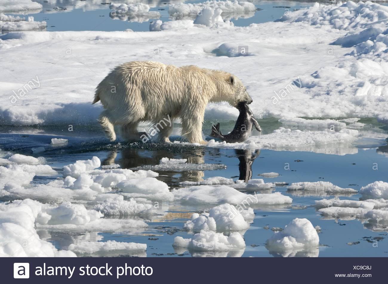 Gemütlich Arktische Tiere Malvorlagen Fotos - Druckbare Malvorlagen ...