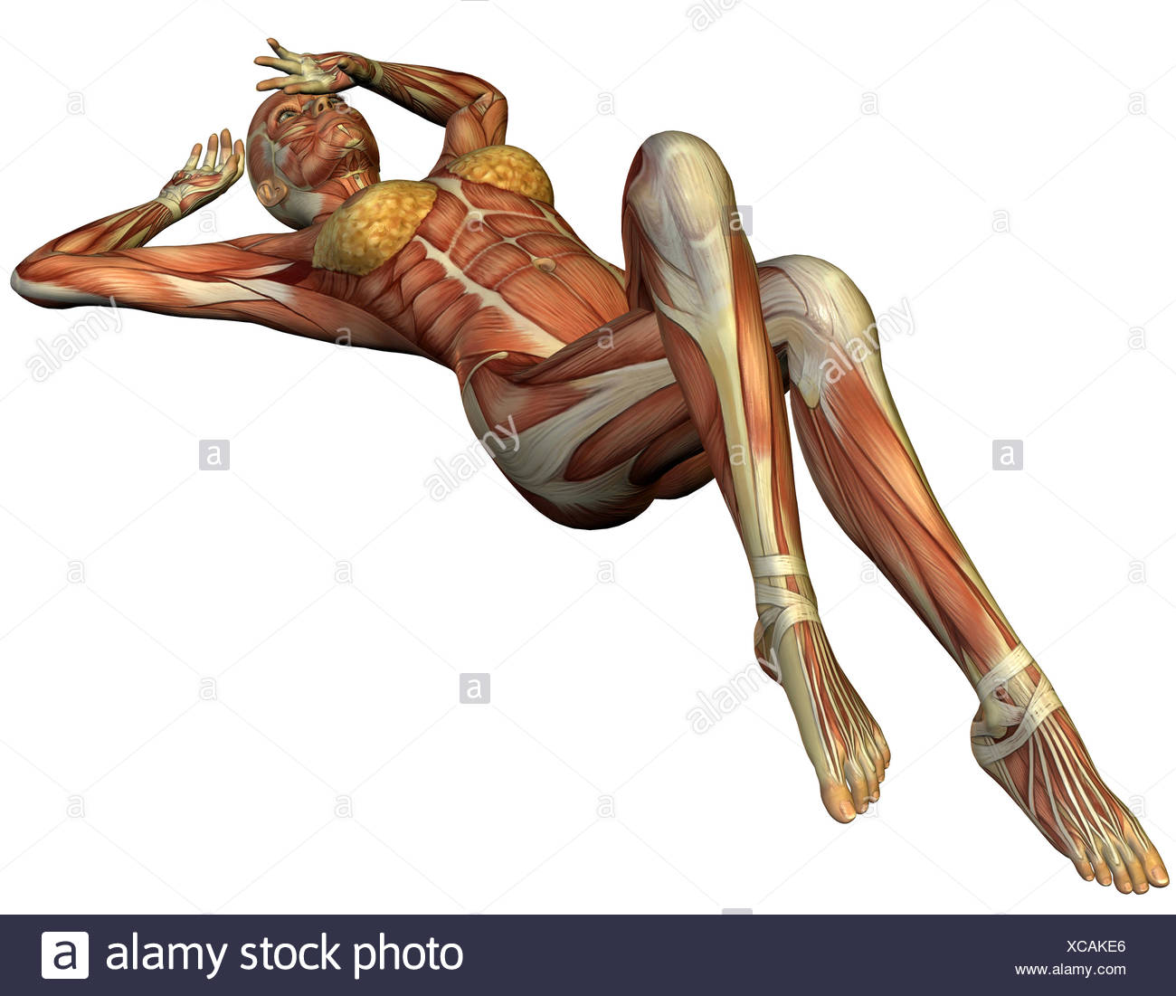 Anatomie Rucken Stockfotos & Anatomie Rucken Bilder - Alamy