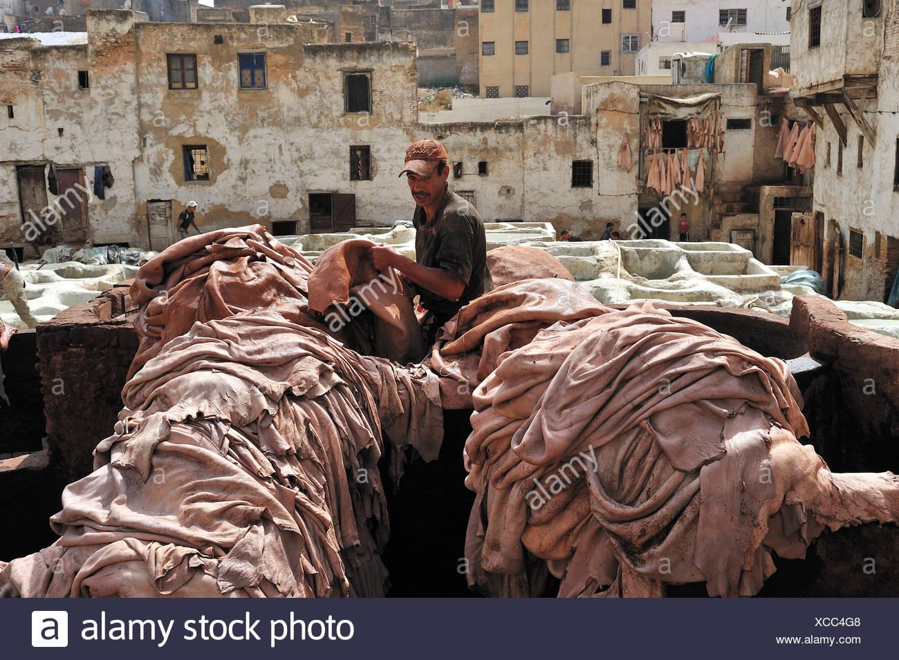 Arbeiter in einer Gerberei Stapeln Tier versteckt sich vor der Gerbung Bottiche, Gerber und Färber Viertel, Fez, Marokko, Afrika Stockbild