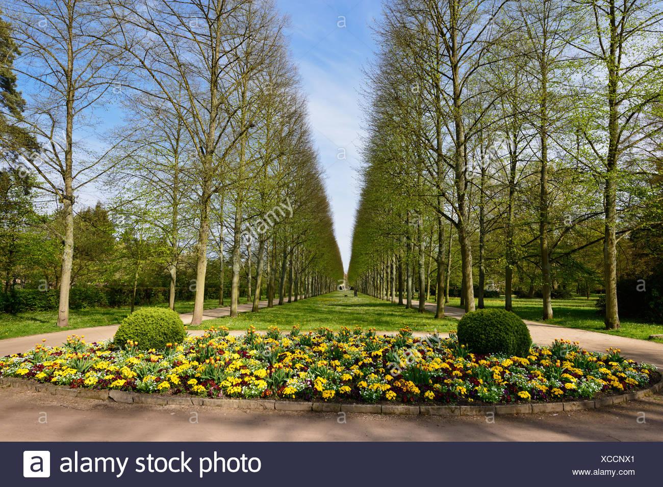 Allee Von Linden Blumenbeet Tulpen Park Franzoesischer Garten