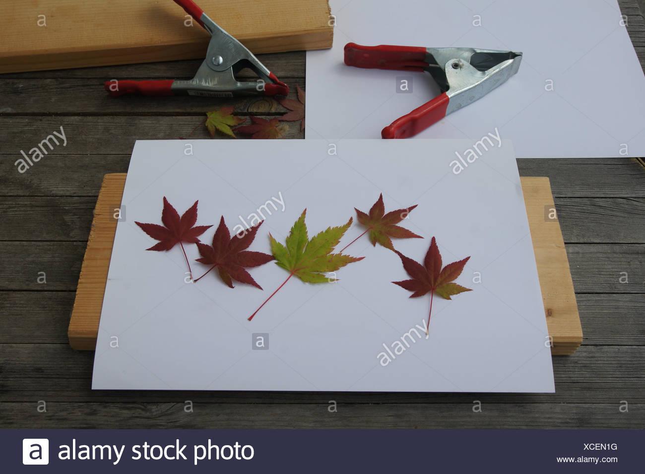 Blätter Pressen preßen stockfotos preßen bilder alamy