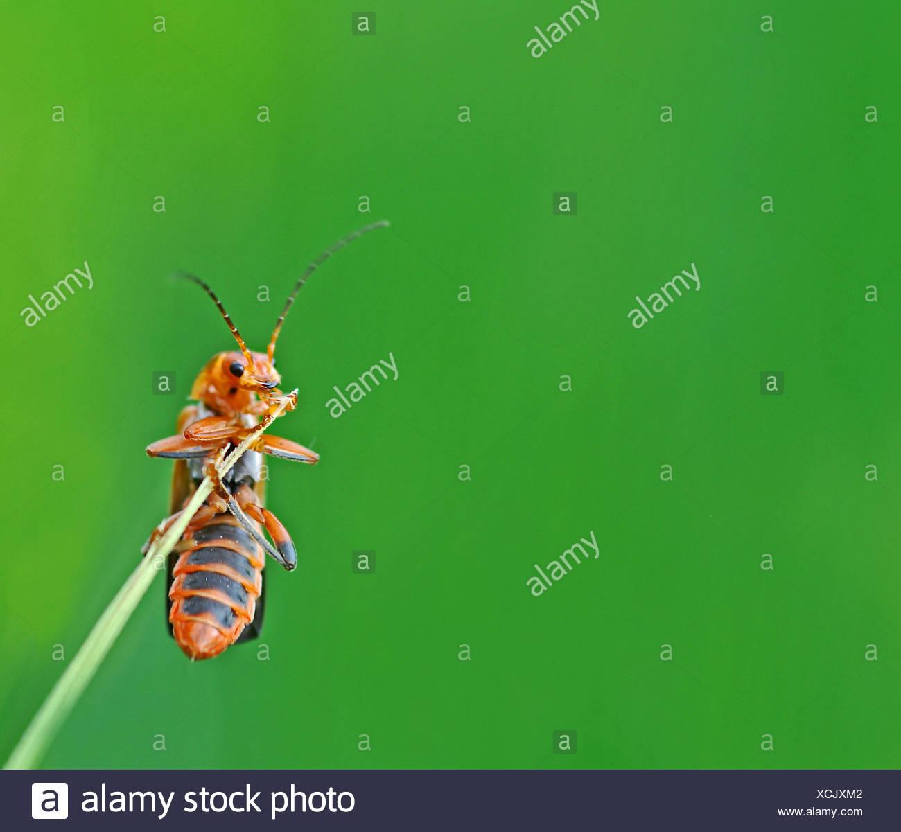 Berühmt Insekten Aus Kupferdraht Zeitgenössisch - Elektrische ...