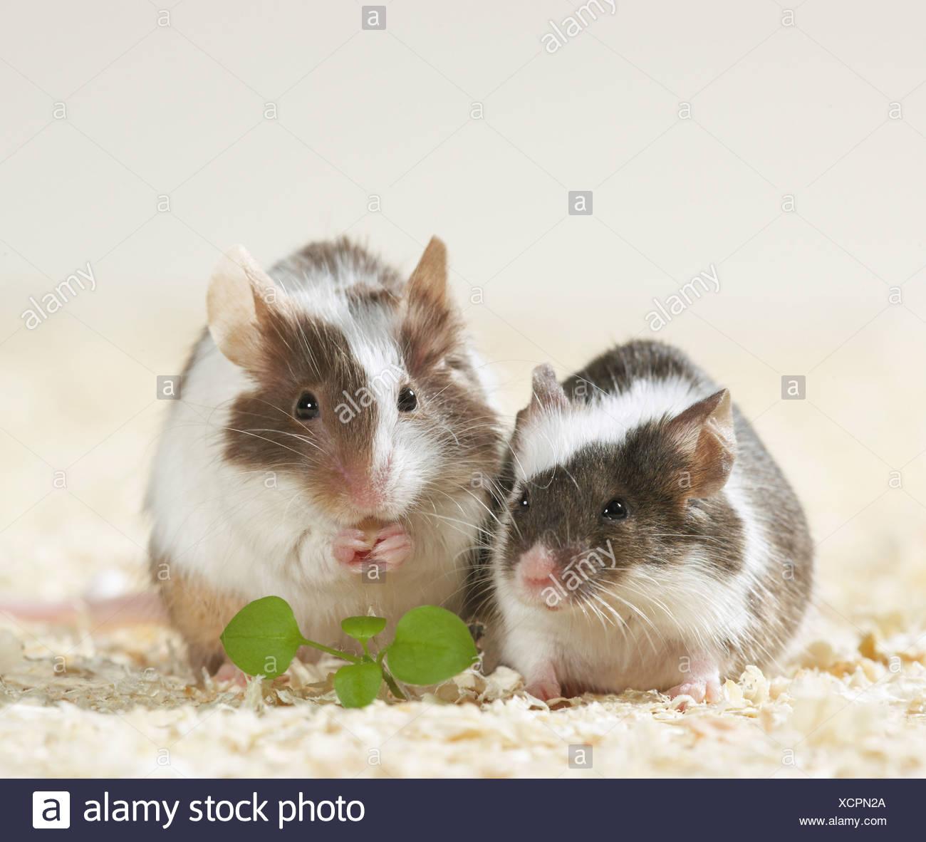 Gemütlich Mäuse Die Drähte Essen Zeitgenössisch - Elektrische ...