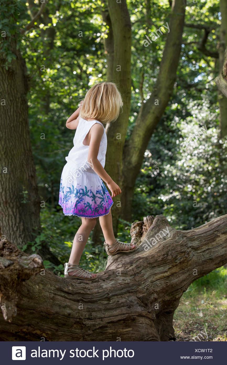 Junges Mädchen balancieren auf einem Baum in einem Wald. Stockbild