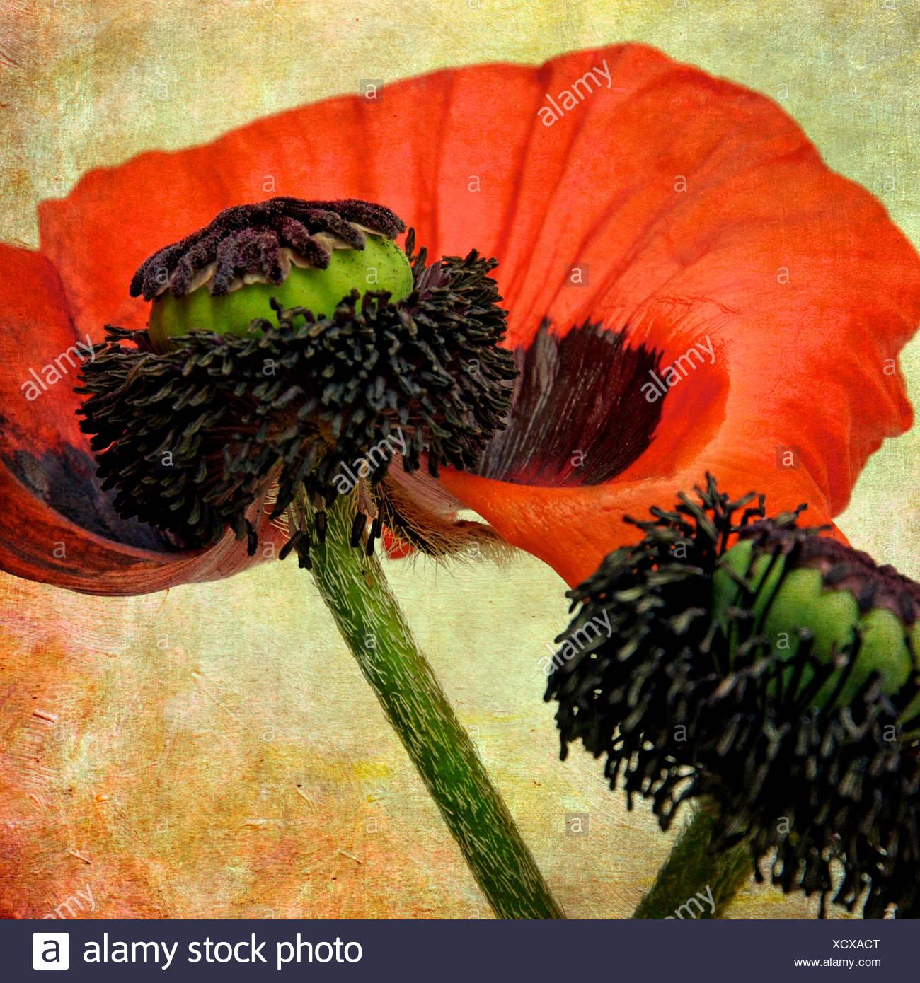 Dying Flowers Stockfotos & Dying Flowers Bilder - Alamy