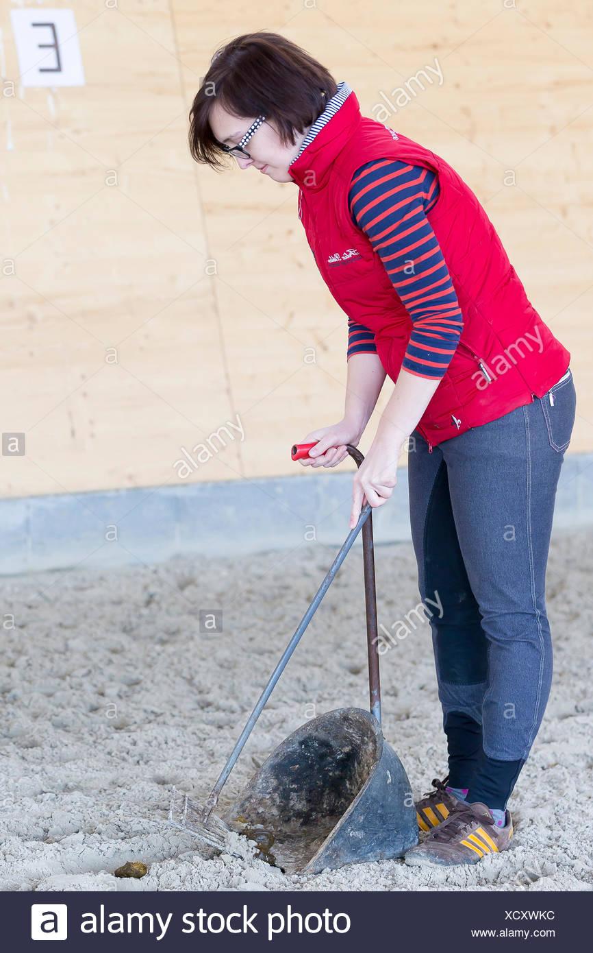 Inländische Pferd sammeln Kot Reithalle Stockbild