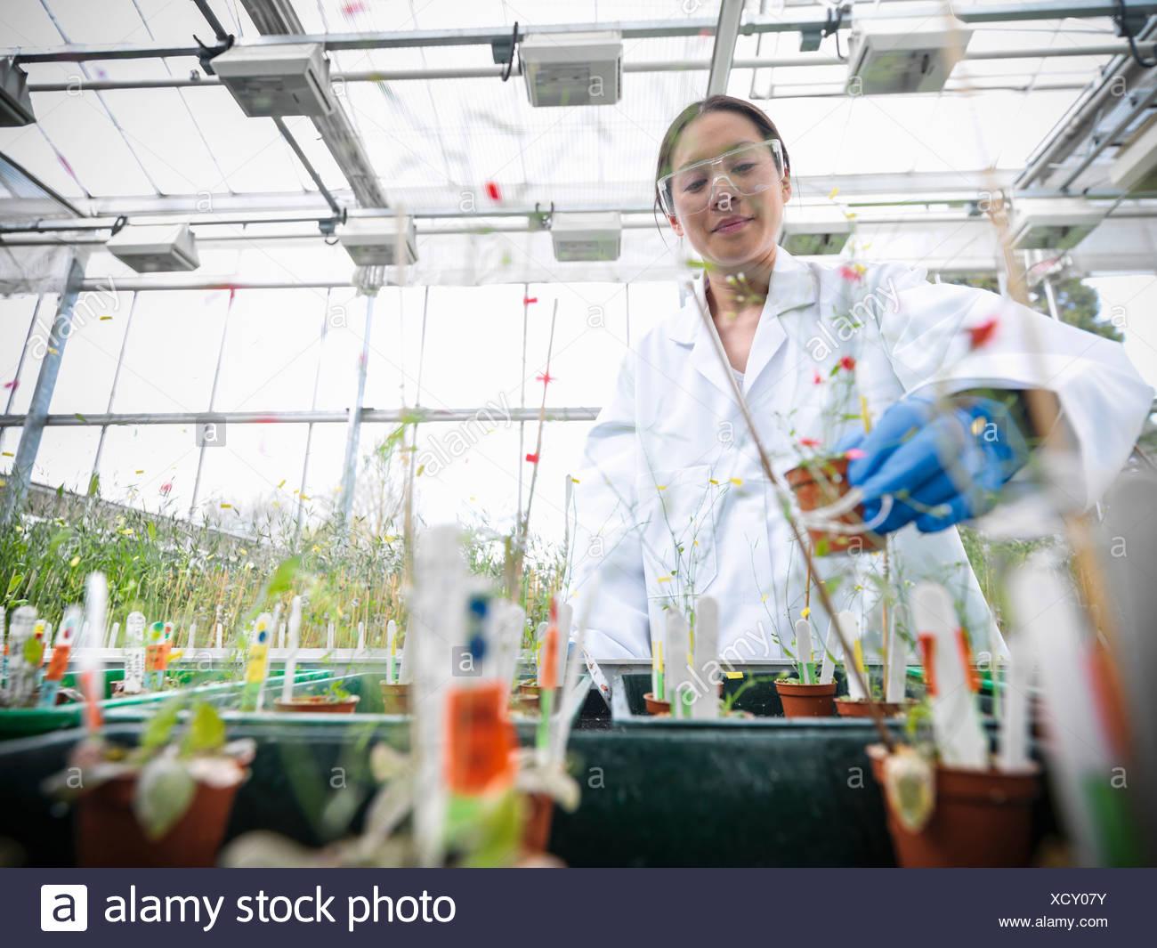 Wissenschaftler arbeiten mit Topfpflanzen Stockbild