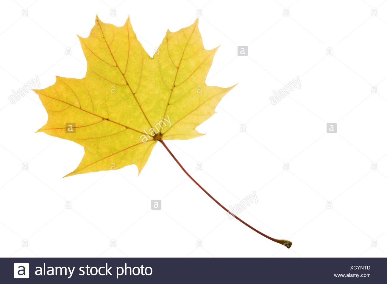 Fantastisch Herbst Färbung Seite Ideen - Ideen Wieder Aufnehmen ...