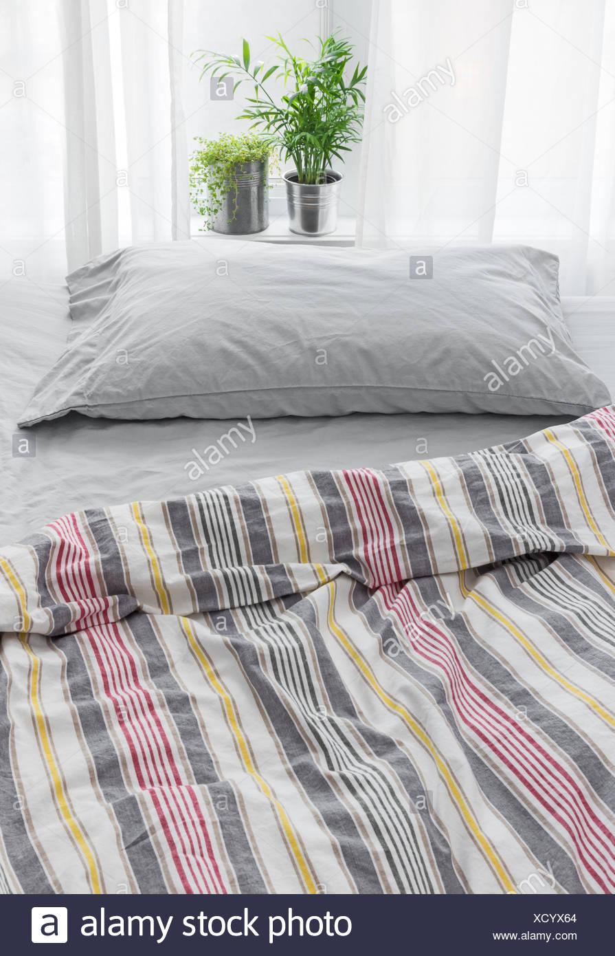 Grune Pflanzen Dekoration Ein Schlafzimmer Stockfoto Bild