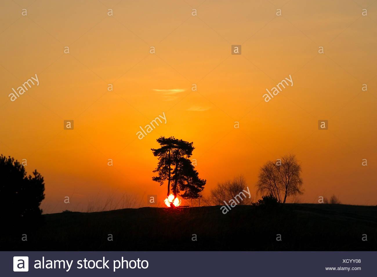 Sonne Raummotive hohem Baum Stockbild