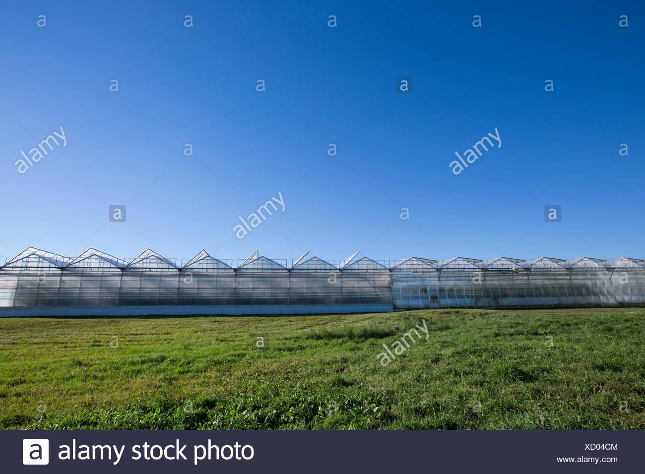 Gewächshäuser in einer Zeile unter blauem Himmel Stockbild