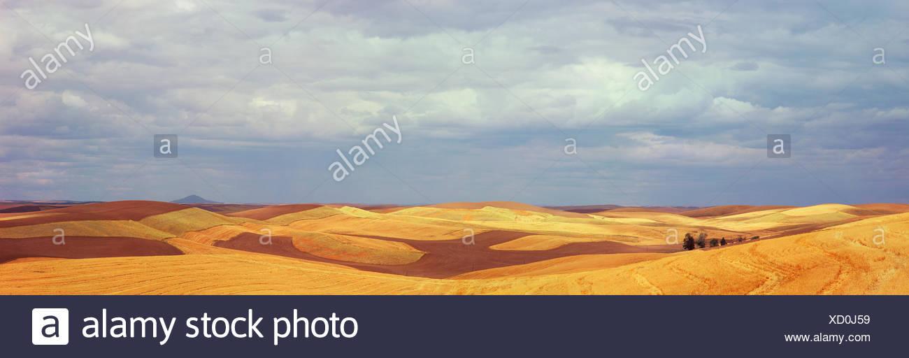 Kontur Felder mit Streifen von gepflügte Erde und geschnittene Getreide werden mit einem stürmischen Himmel im Hintergrund gezeigt. Stockbild