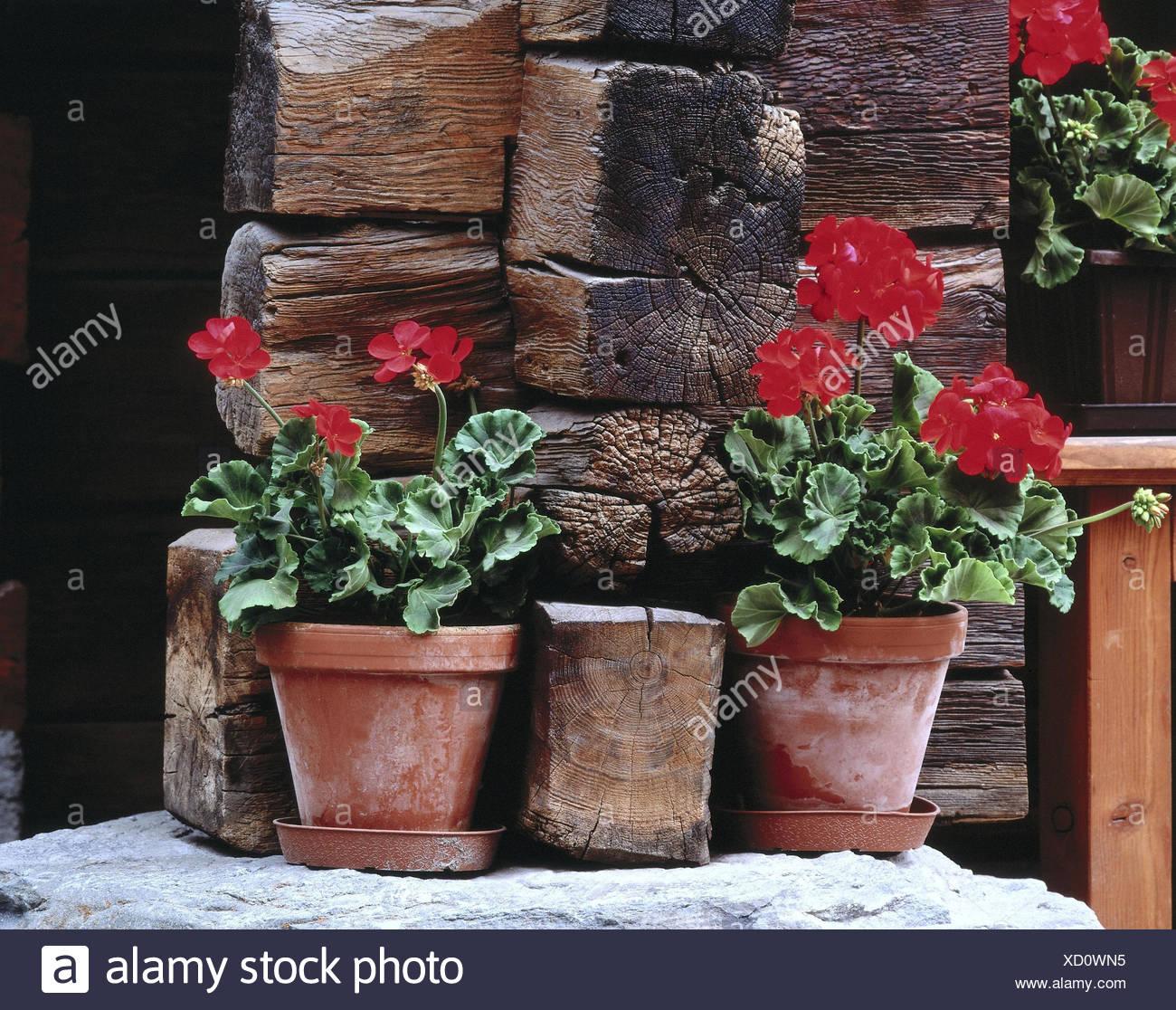 Blumentöpfe, Geranien, Hölzern, Hölzerne Balken, Pelargonien, Pflanzen,  Blumen, Blüten, Blüte, Blumentopf, Topfpflanzen, Blumen, Blumenschmuck,  Balkonblumen ...