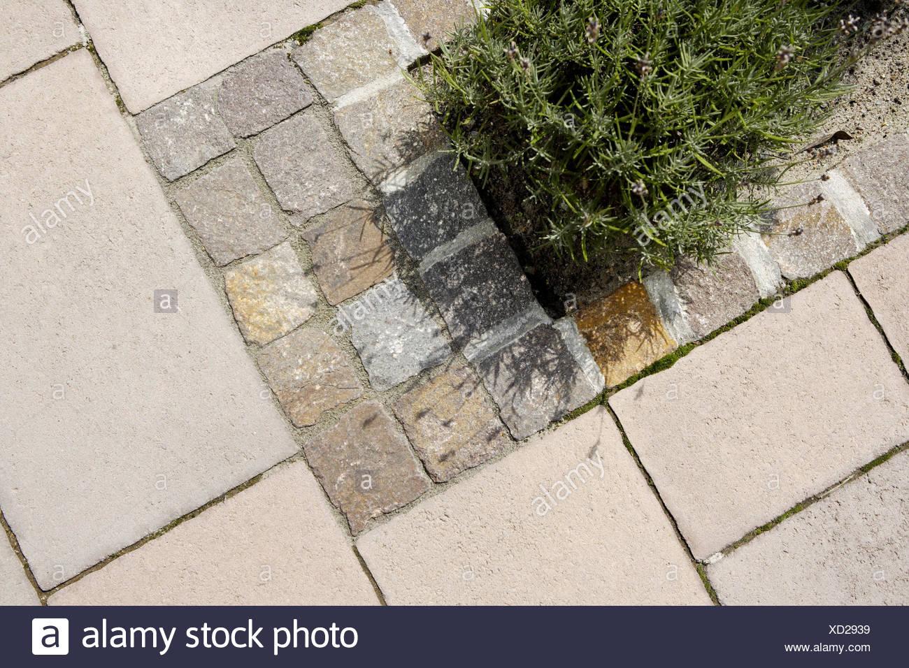 Abgrenzung Patch Lavendel Garten Terrasse Pflastersteine