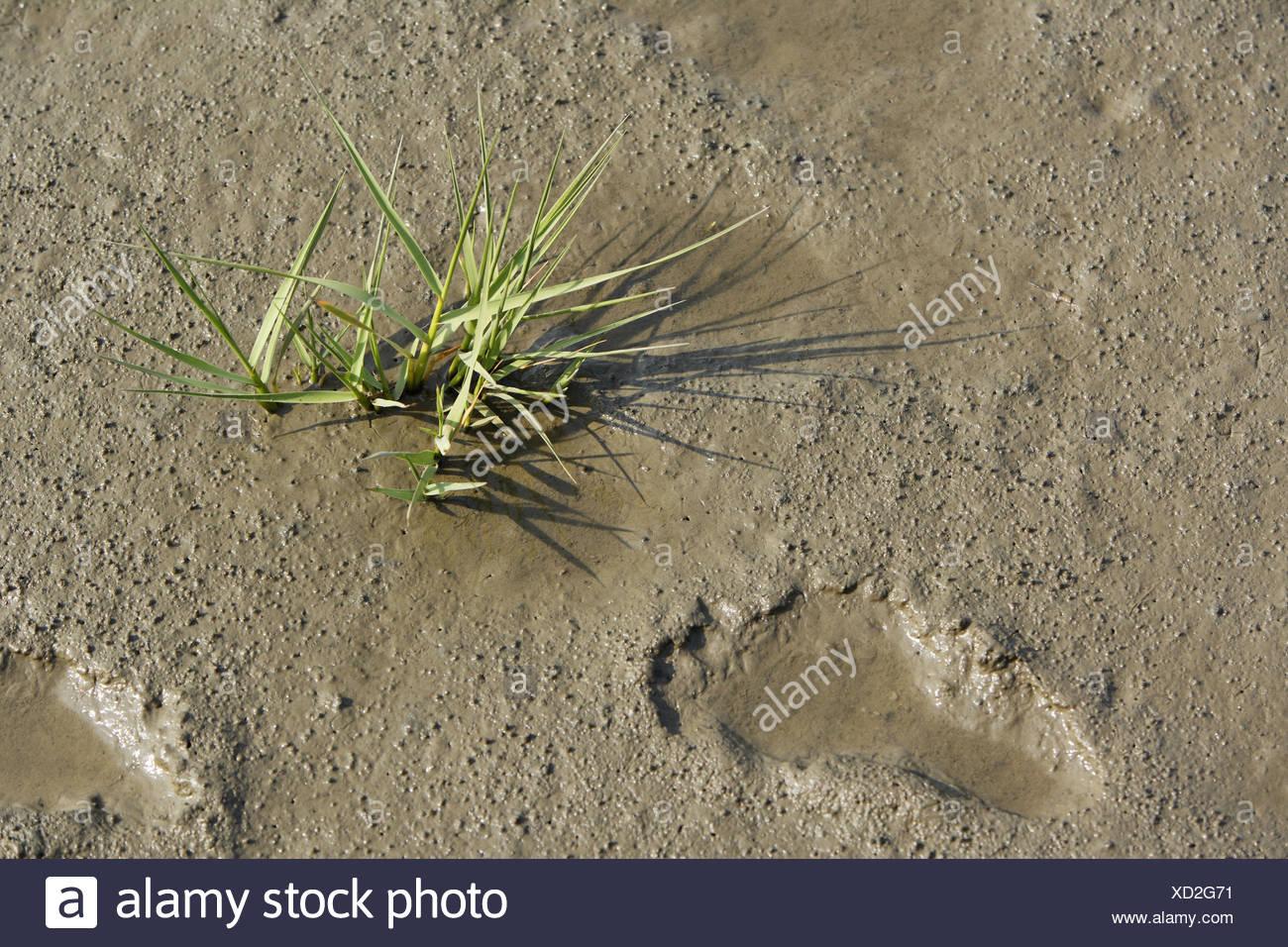 Watt, Blätter Rasen, Fußabdrücke, Strand, Sand, Schlamm, Rasen, Pflanzen, Spuren, Spuren, menschlich, menschenleer, Natur, Stockbild