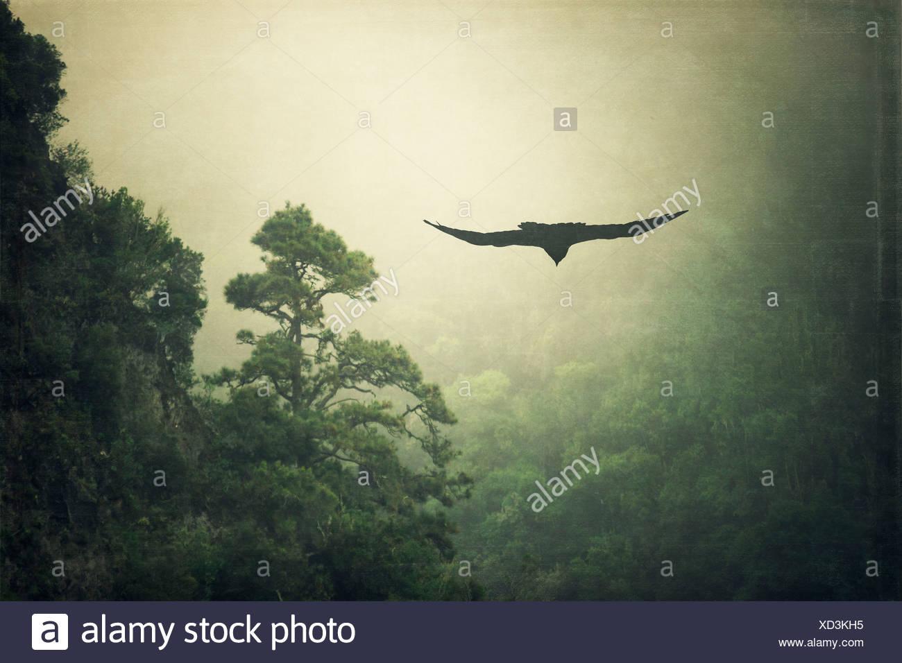 Spanien, La Palma, Raven und Nebel gehüllten Berg Stockbild