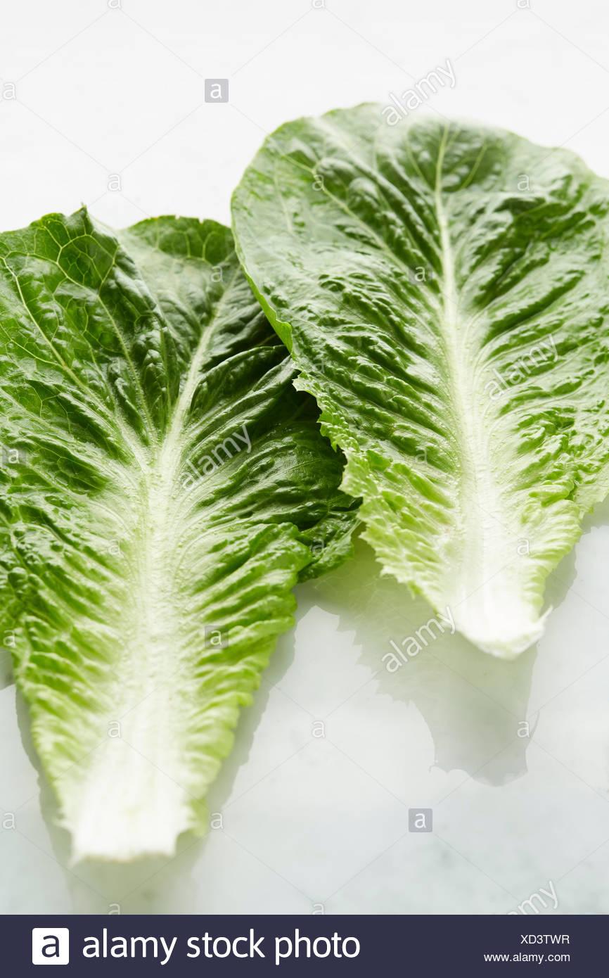 Romano-Salat auf Marmor-Arbeitsplatte. Nahaufnahme Stockbild
