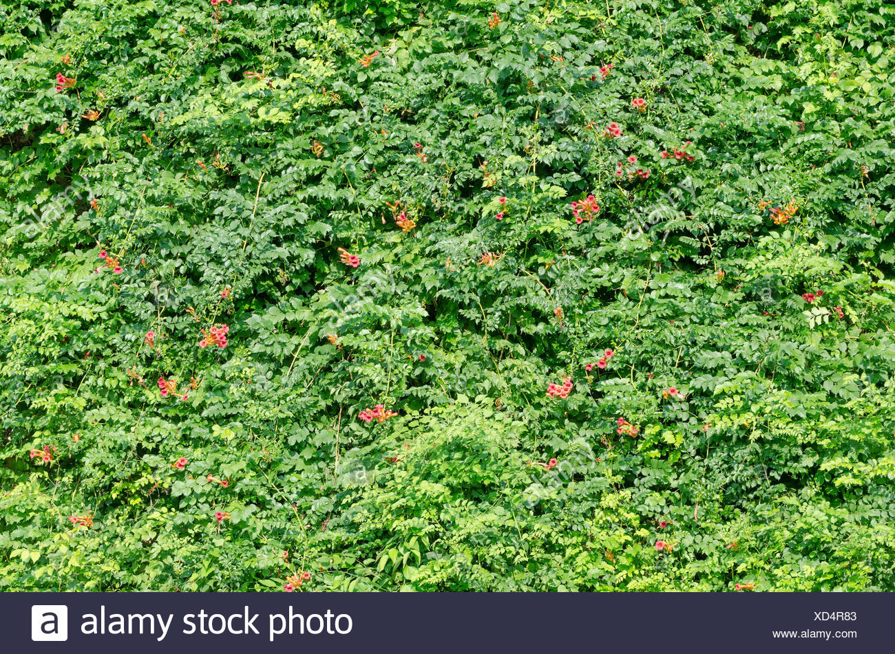 Fence Pattern Stockfotos & Fence Pattern Bilder - Seite 17 - Alamy