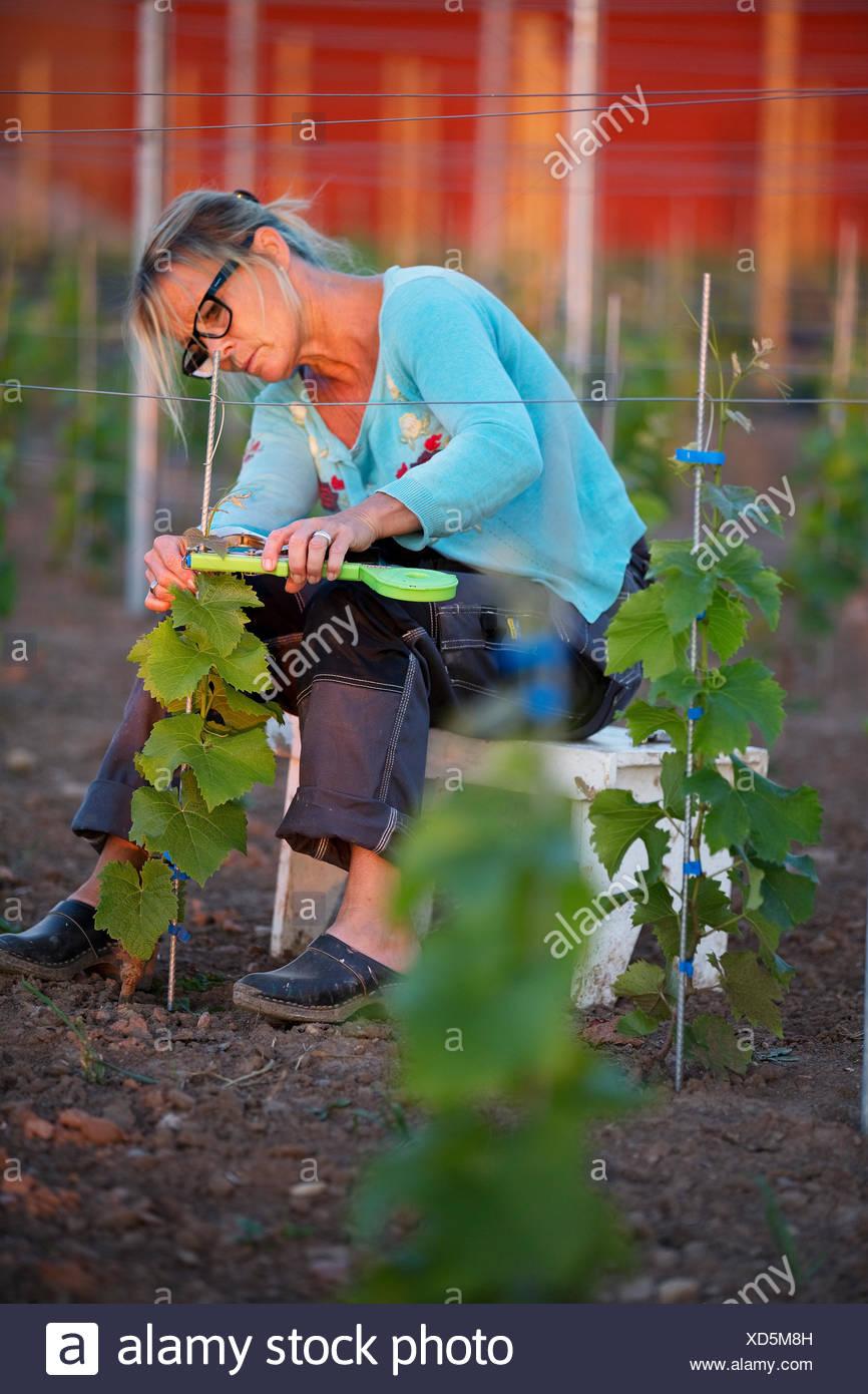 Schweden, Ostergotland, Reife Frau, die Arbeiten im Weinberg Stockfoto