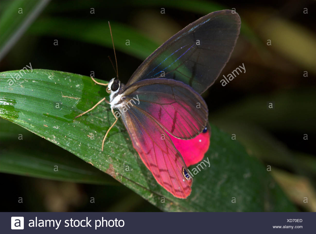 Erfreut Einfache Schmetterling Färbung Seite Zeitgenössisch ...