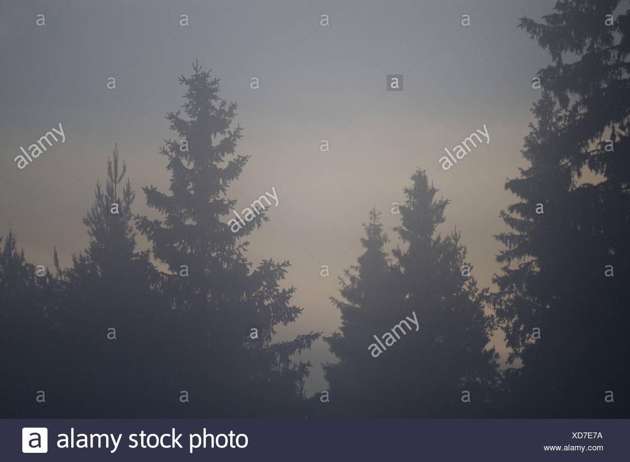 Baumkronen im Nebel Stockbild