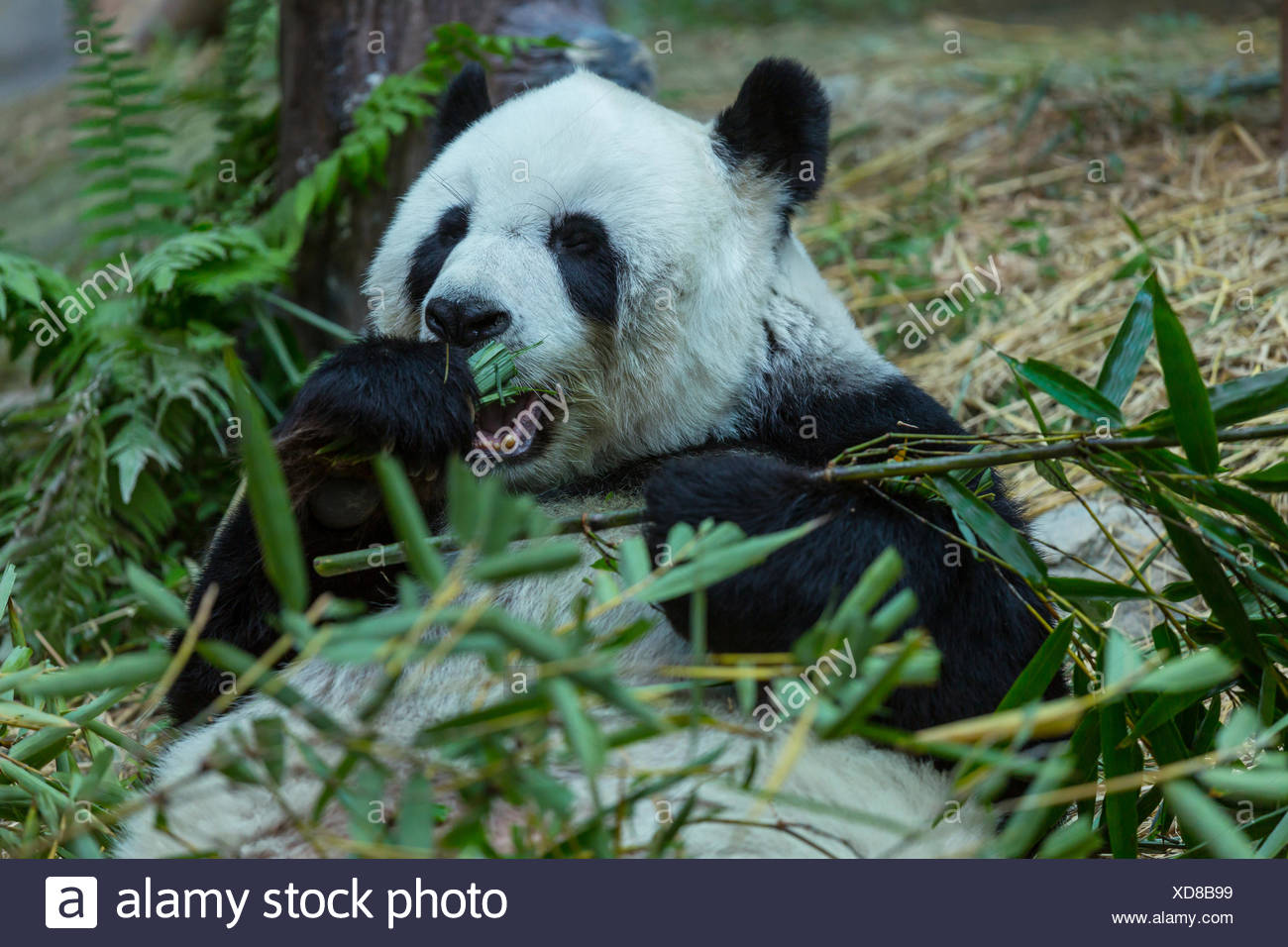 Schön Pandabär Malvorlagen Zum Ausdrucken Galerie - Beispiel ...
