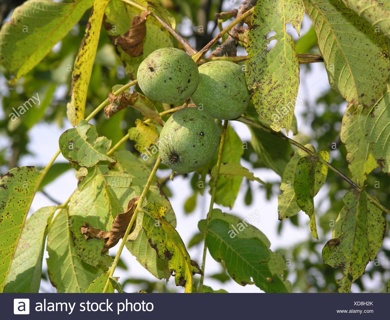 Atemberaubend Früchte Die Blätter Färben Bilder - Framing ...
