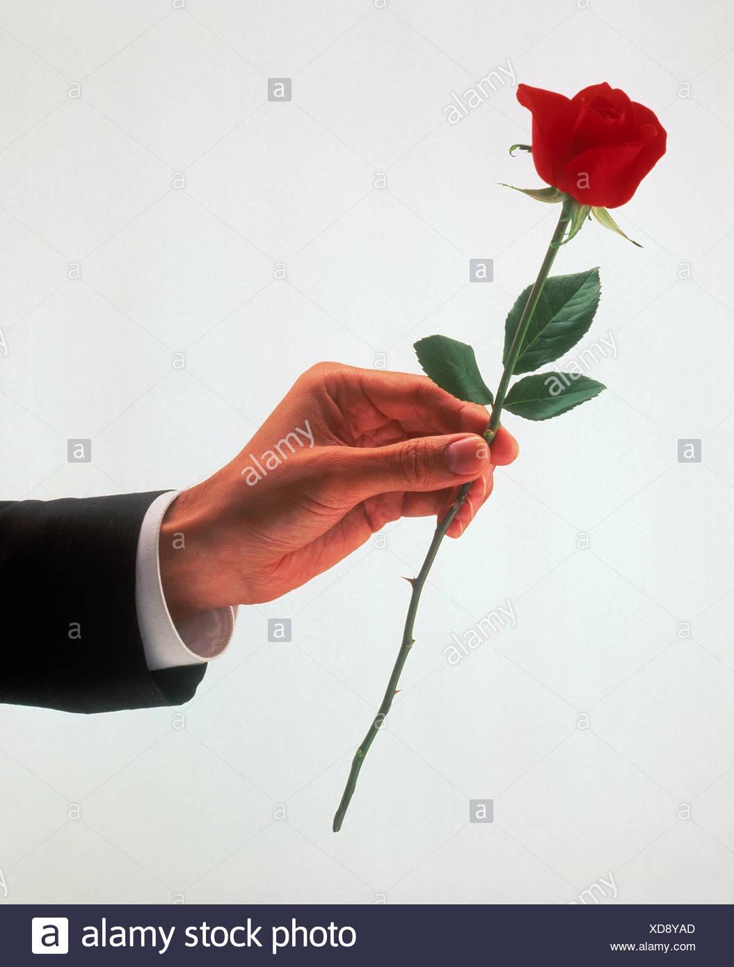 Mann Detail Hand Rose Rot Kopieren Sie Raum Liebe