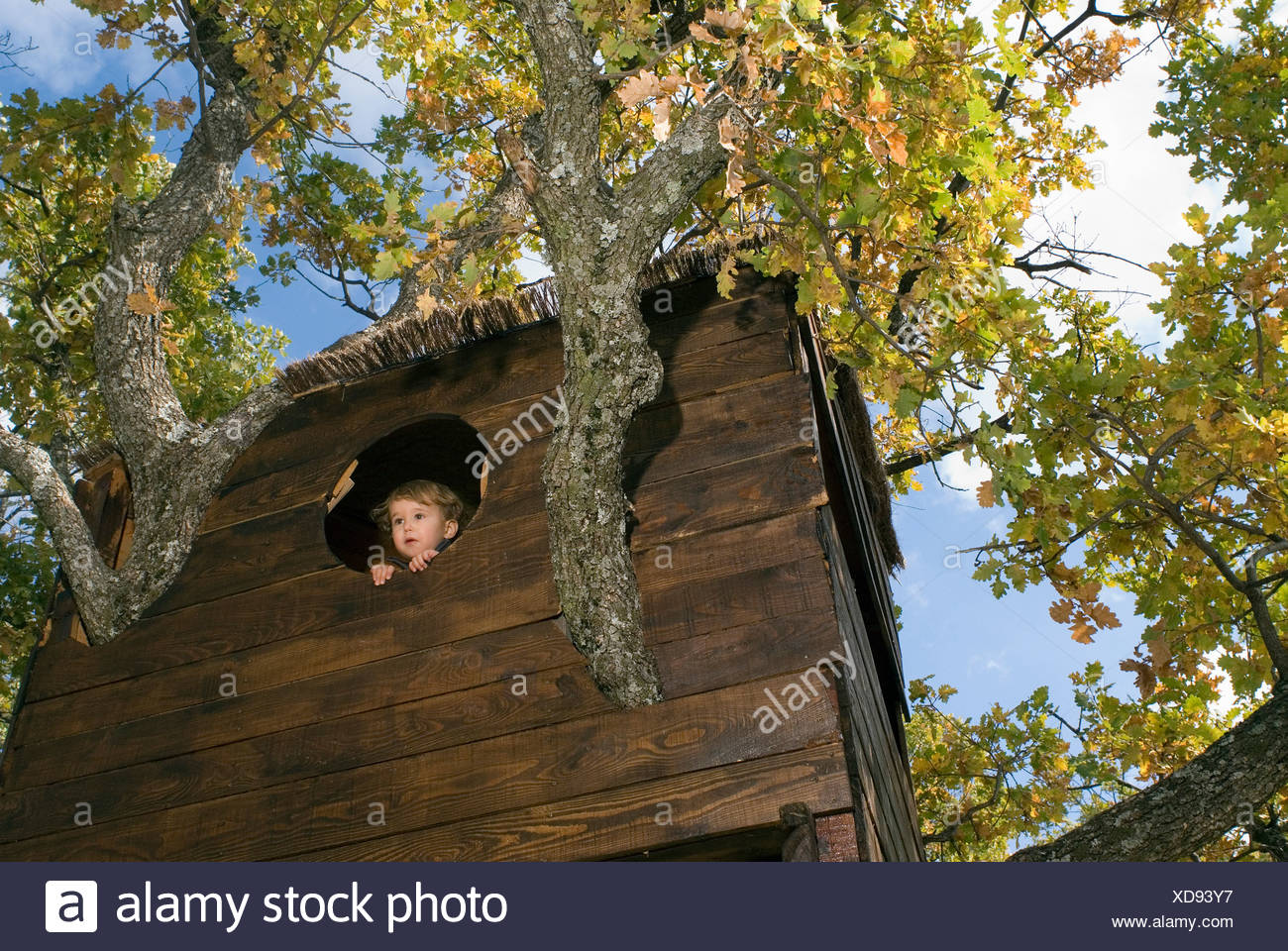 2-3 Jahre alter Junge in einem Baumhaus Stockbild