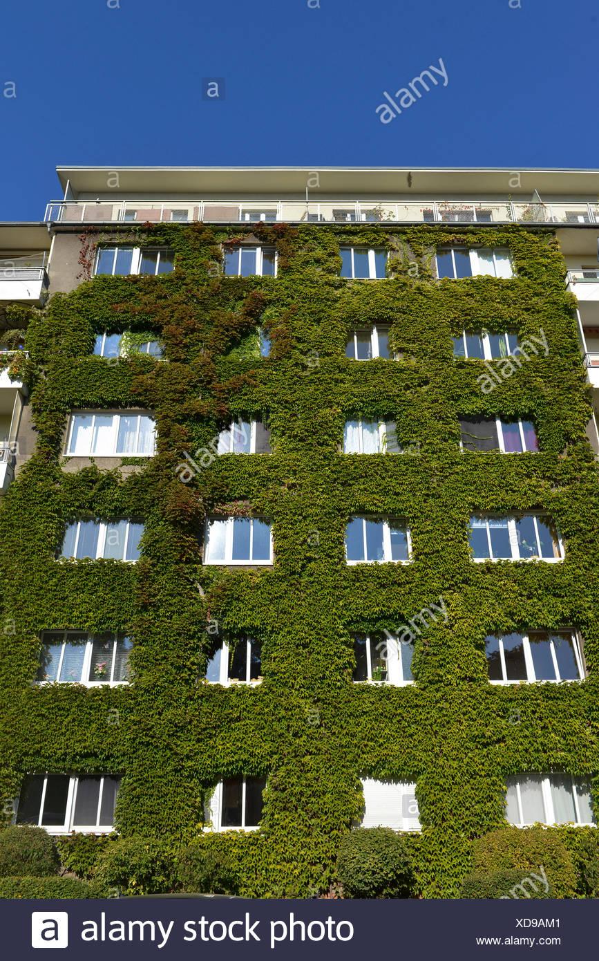 Fassadenbegruenung, Freiherr-Vom-Stein-Straße, Schöneberg, Berlin, Deutschland Stockbild