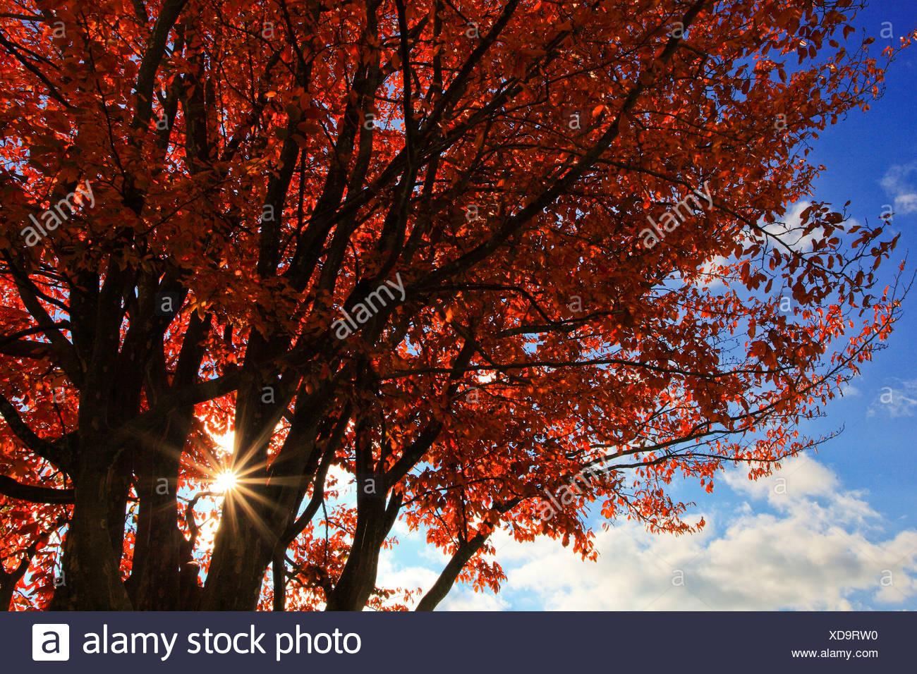 Erfreut Herbst Färbung Bilder Frei Bilder - Malvorlagen Von Tieren ...