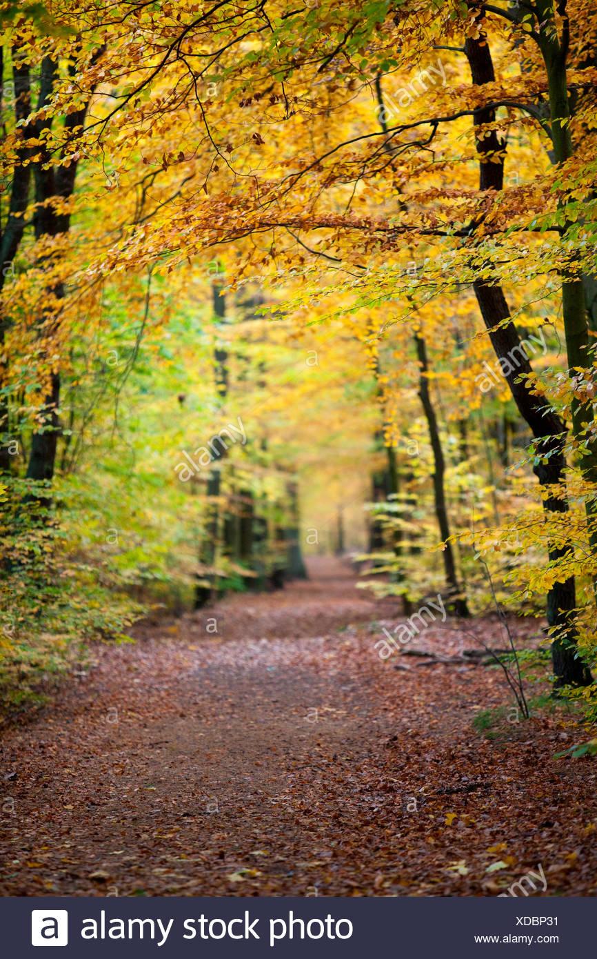 Waldweg im Herbst Grunewald, Berlin Stockbild