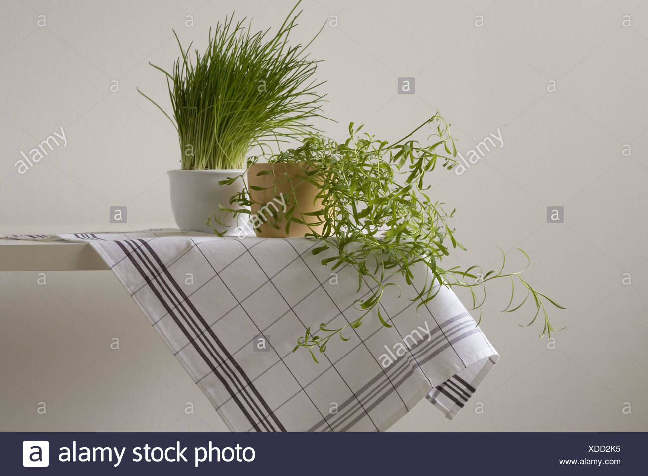 Küchentisch, Tuch, Blumentöpfe, Kräuter, Stockbild