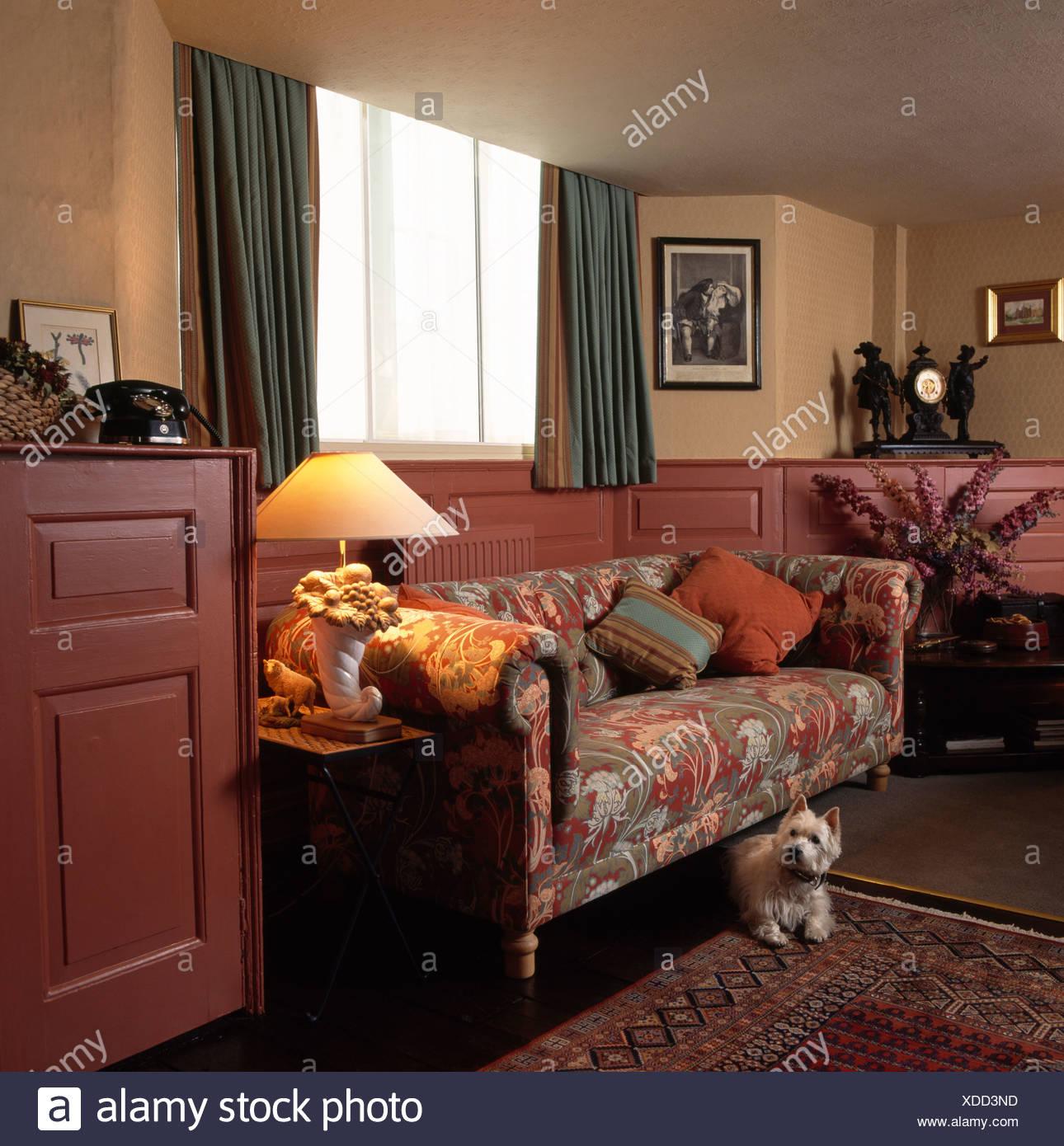 Kleiner Weisser Hund Im Wohnzimmer Mit Gemusterten Chesterfield Sofa