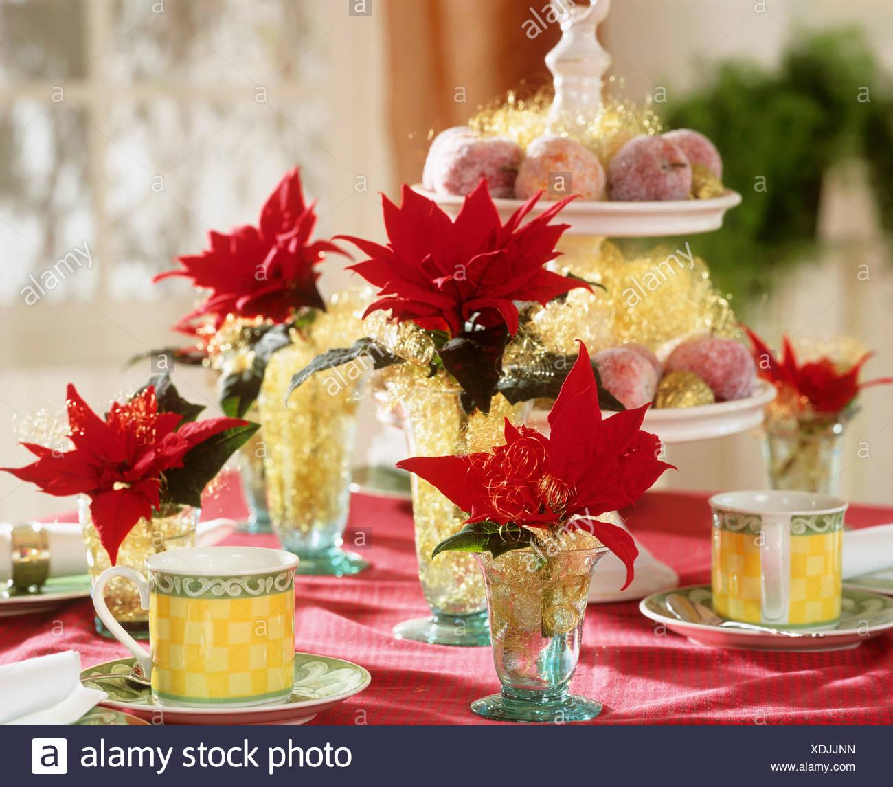 Tischdekoration Mit Weihnachtssternen Und Gezuckerten Apfel