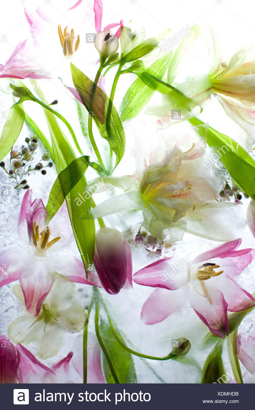 Nahaufnahme von schönen Blumen Stockbild