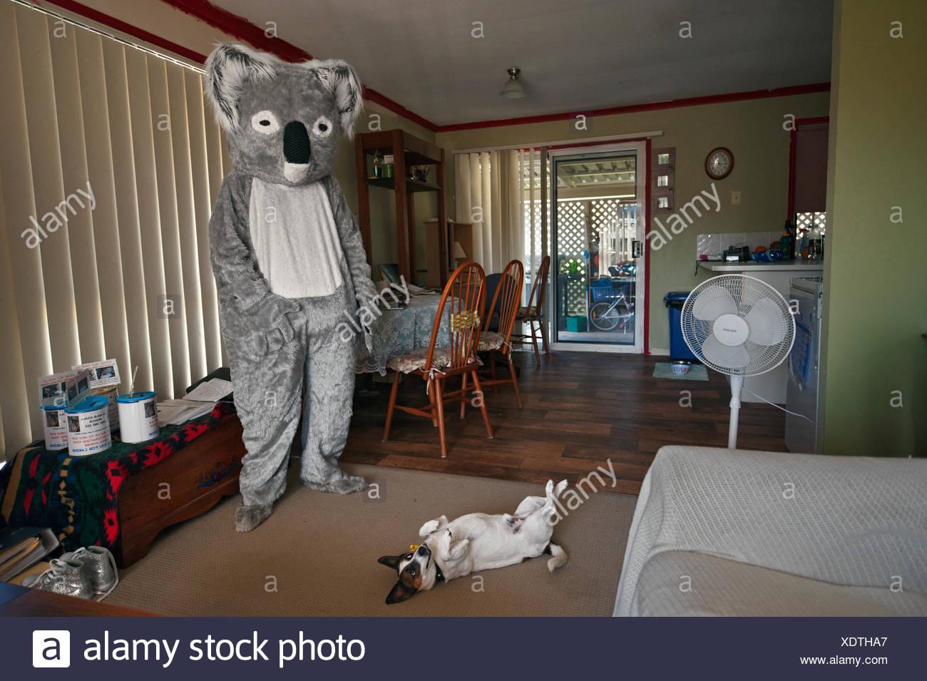 Ein freiwilliger dons einen Koala-Anzug bei Veranstaltungen zur Sensibilisierung der Öffentlichkeit. Stockbild