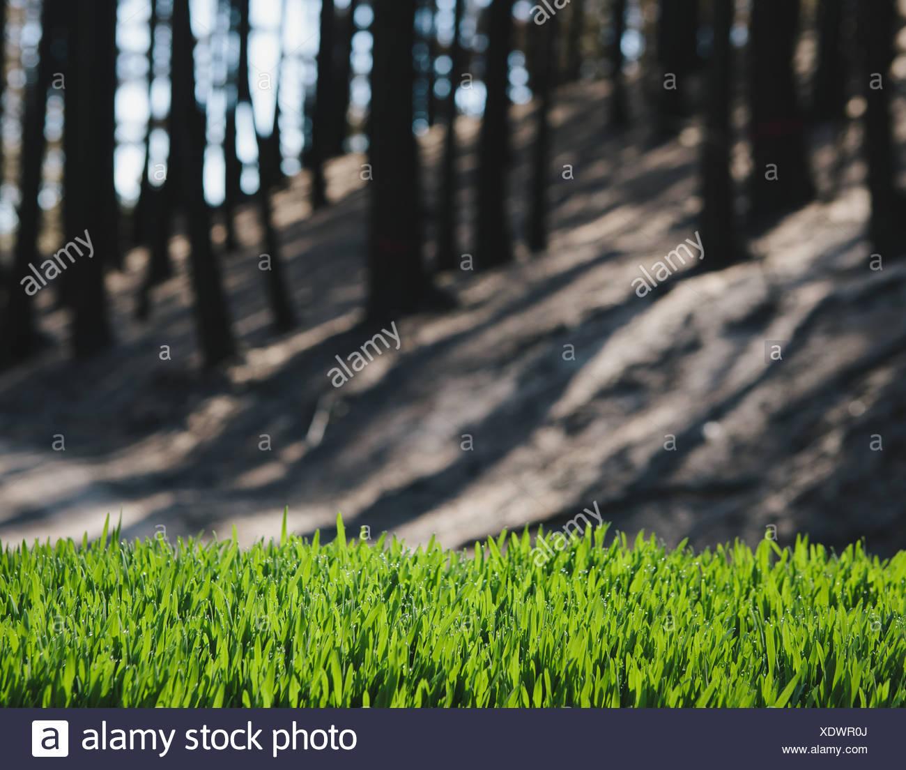 Washington State USA grüne Rasen im Vordergrund brannte vor kurzem Wald Stockbild