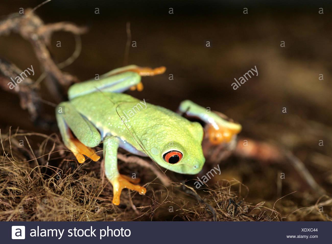 farbige bunte wunderschöne vielfältige farbenprächtige Frosch Kröte ...
