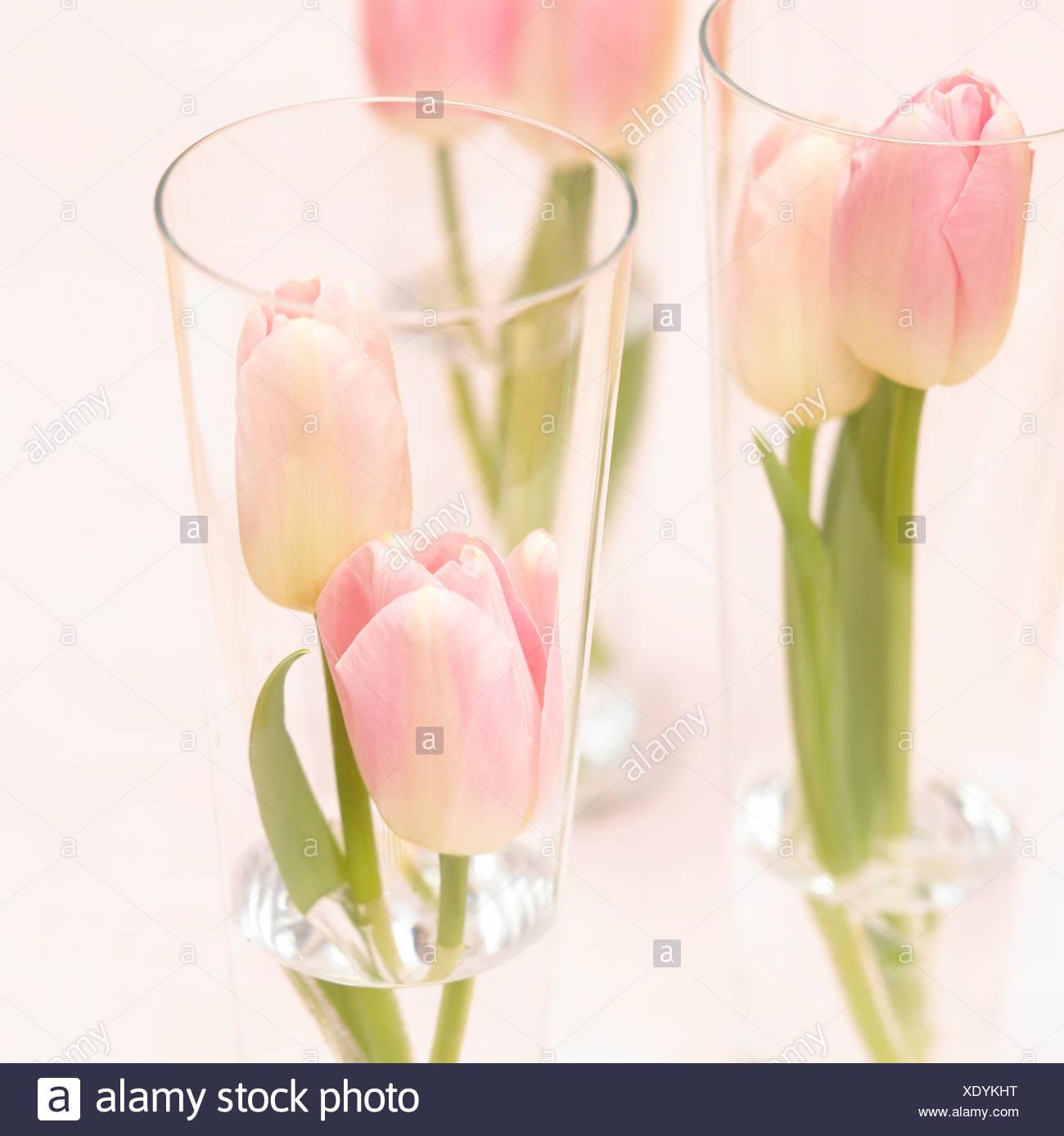 Tisch-Dekoration, Tulpen in Gläsern Stockbild
