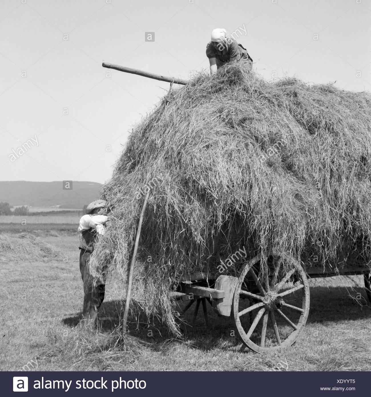 Bauern Bei der Heuernte in Westfalen, Deutschland, 1930er Jahre. Bauern Heuernte am Wesfalia, Deutschland der 1930er Jahre. Stockbild